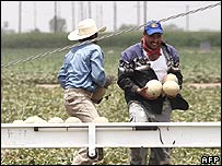 US workers harvesting melons in Arizona. File photo