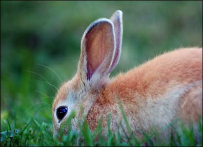 This rabbit was spotted nibbling the grass in Cardiff's Sophia Gardens (Mr Sleight)