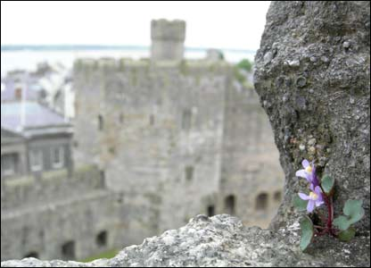 Arve Kjell Uthaug took this picture on a visit to Caernarfon Castle