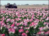 Poppy patrol in Helmand