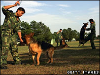 Military dogs being trained in Hubei province, China, on 28 July 2006