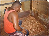 Cocoa fermenting