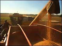 Un operador de tractor espera la carga de frijoles de soya