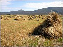 Traditional harvesting in the Western Isles (Pic: RSPB Images)