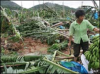 Trees blown over by Tropical Storm Prapiroon at a farm in China's southern Guangdong province.