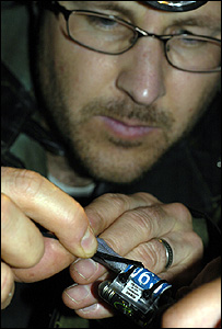 Dr Scott Shaffer applying a tag to one of the birds Sooty shearwater (Image: Darren Scott)