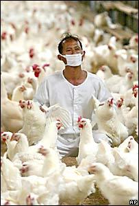 Un trabajador recoge gallinas en un galpón.