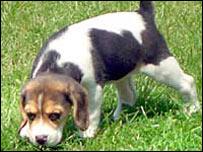 Dora the puppy