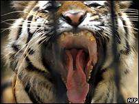 Владелец тигра проиграл дело против властей Нью-Йорка