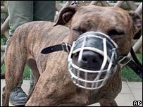 Pitbull terrier - generic