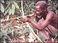 A pygmy hunting in Uganda