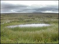 Lewis peatlands (Pic: Paul Rincon/BBC)