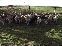 Dogs from the Tiverton Staghounds