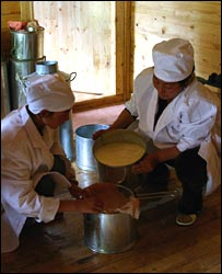 Two workers making the cheese