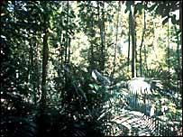 Bosque de lluvia en el Amazonas
