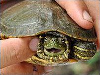 Tortuga hallada en Galápagos