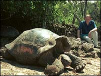 Giant Galapagos tortoise (BBC reporter Andrew Marr is in the background - photo from 2002)