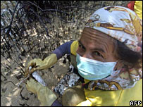 A woman wipes oil from mangroves on Guimaras Island