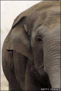 An elephant, Getty