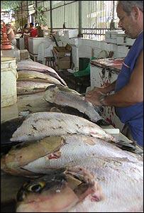 Mercado de pescado en Manaos