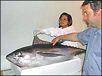 Dr Patricia Lee (back) and Dr Jon Houghton, of Swansea University's Biological Sciences Department, with the bigeye tuna