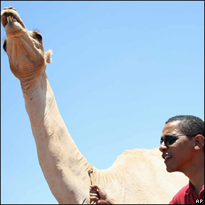 US Senator Barack Obama standing next to a camel