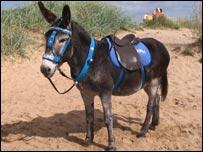 Bruno the donkey