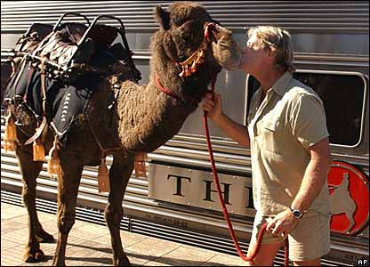 Steve Irwin with a camel