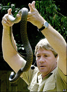 Steve Irwin with a taipan snake