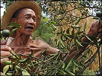 Chinese farmer tends his orange crop