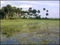 Swamp land, file photo