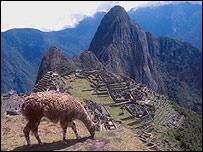 Llama en ruinas de Machu Picchu, en Perú.