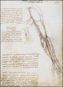 Vessels of the arm with comparison of vessels in the old and the young (c.1508).