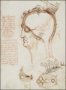 Vertical and horizontal sections of the human head and eye (c.1489).