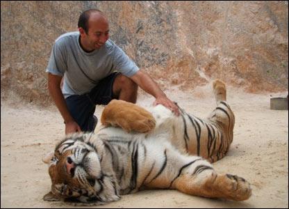 Man stroking a tiger