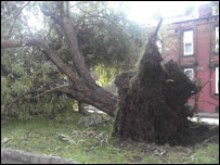Tree uprooted by tornado, picture supplied by Salena Riley