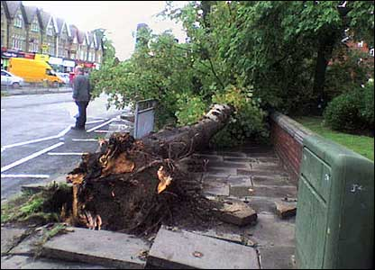 Picture of an uprooted tree, sent in by Michael Young