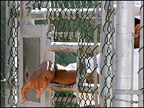 Prisionera en Guantánamo