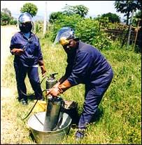 Fumigación con DDT