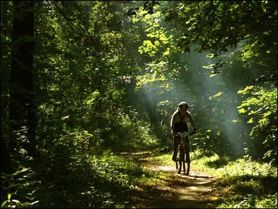 Велосипедисты едет по Битцевскому парку