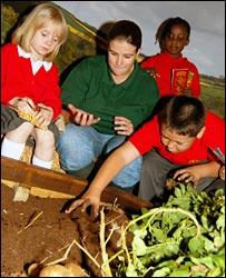 Pupils planting seed potatoes