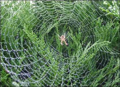 A spiders web in Carmarthen taken by Olive Dyer and sent in by Ioan Dyer