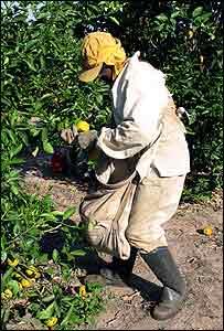 Fruit-picker Antonio Leandro at the Fazenda Santa Maria
