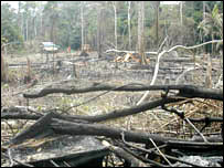 Burned rainforest. Image: BBC