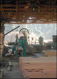 Sawmill. Image: BBC