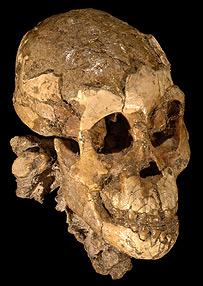 Australopithecus afarensis  Image: Zeresenay Alemseged