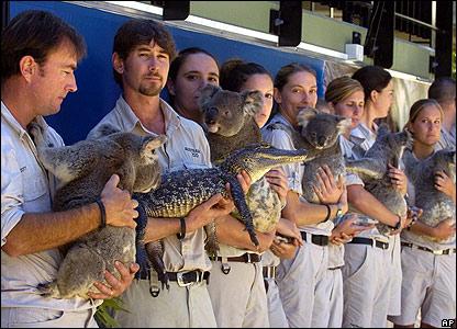 Koalas and crocodiles
