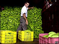 Un hombre en Panam� mira su cargamento de bananos