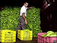 Un hombre en Panamá mira su cargamento de bananos