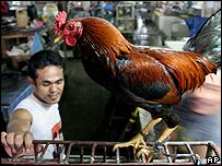 Chicken at a market in North Sumatra, Indonesia